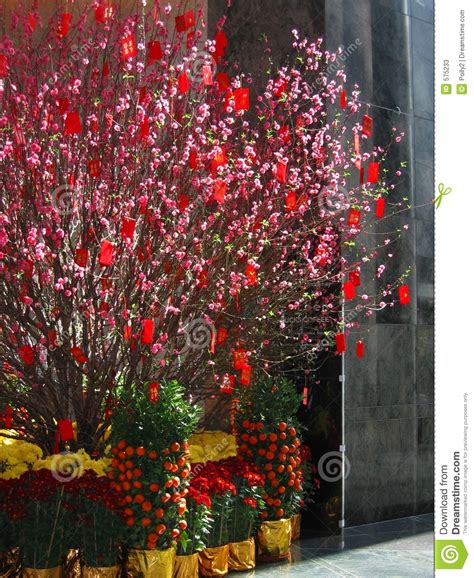 fortune tree new year new year money tree 2 stock photos image 575233