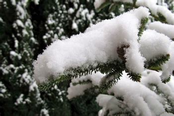 snowiest fake tree science project make your own snow