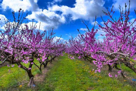 sfondi desktop fiori di primavera primavera un sorriso per tutti gabitos