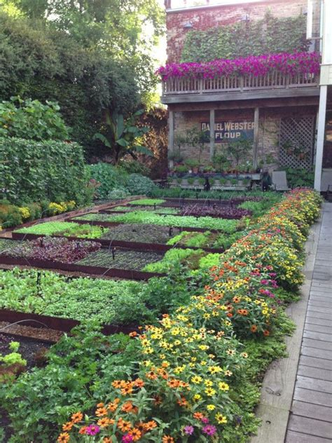 Beautiful Vegetable Garden It Could Not Be A More Beautiful Morning In My Garden