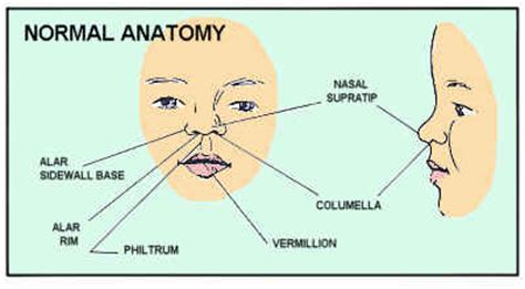 External Lip Anatomy Nivoteamfo