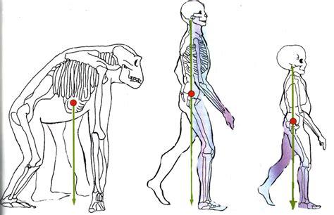 organi interni lato sinistro corpo umano non umano ma vivente