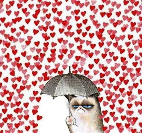grumpy cat valentines quot valentines day i it quot cats and umbrellas