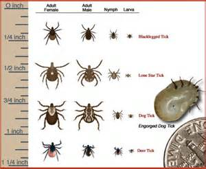Repelling Mosquitoes Backyard Repelling Ticks Amp Fleas Before They Infest Your Yard