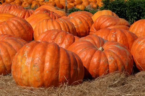 the pumpkin i