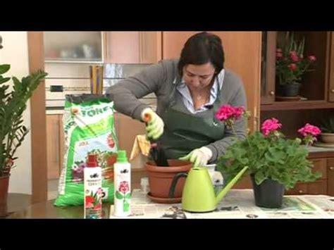 come piantare l aglio in vaso piantare aglio in vaso in 10 minuti dall orto ai forn