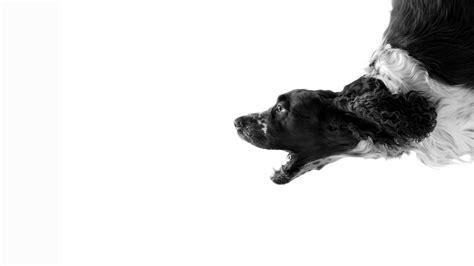 Black And White Dog Wallpaper | black and white dog wallpapers 45 wallpapers adorable
