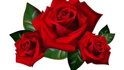 hd wallpapers 1920x1080 png red roses png clipart picture hd desktop wallpaper