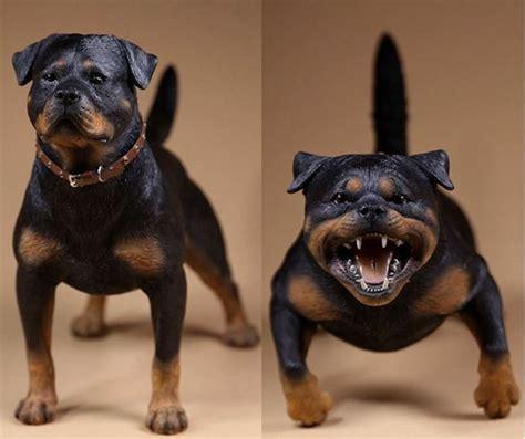 rottweiler accessories 17 best ideas about german rottweiler on rottweilers rottweiler puppies