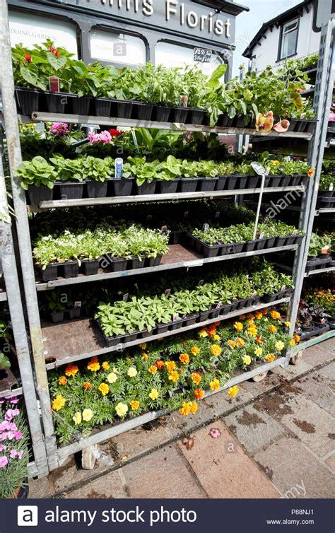 venta de plantas para jardin plantas de jardin exterior great plantas de jardin