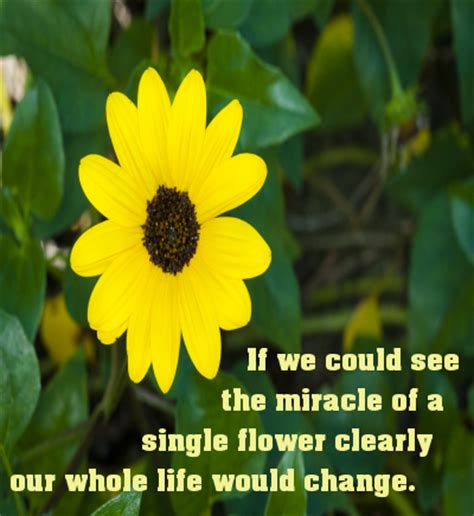 The Miracle Of Free Miracle Of A Flower Quote Pinlet Magic