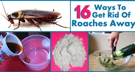 how to get rid of roaches permanently