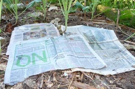 organic weed control   naturally kill weeds