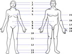 penjelasan lengkap anatomi tubuh manusia biologi asalasah