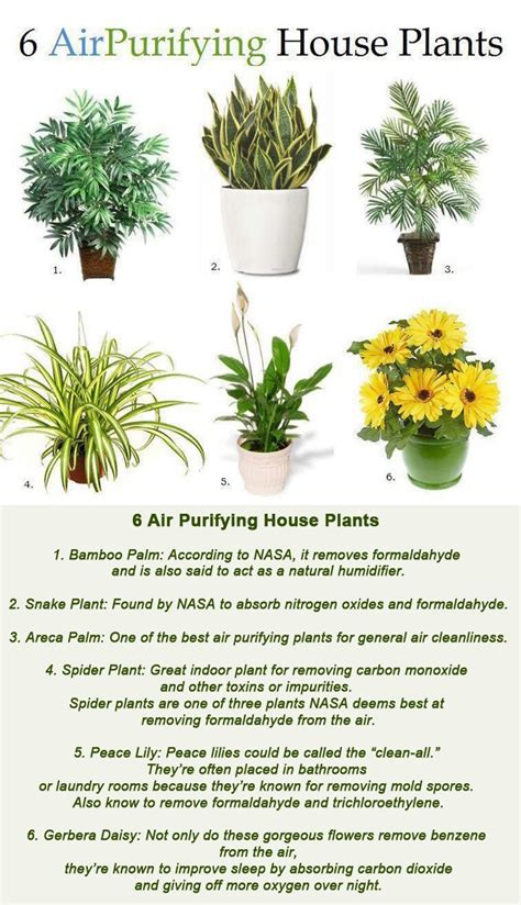 benefits of house plants 6 air purifying house plants 6 air purifying house plants