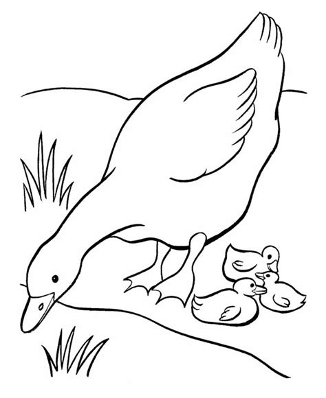 mother duck coloring page 38 best images about goose coloring pages and embroidery