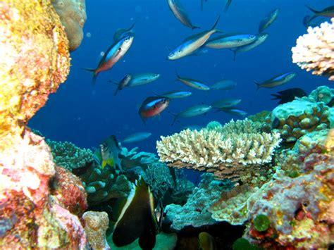 wallpaper keindahan alam bawah laut gambar wallpaper pemandangan bawah laut gudang wallpaper