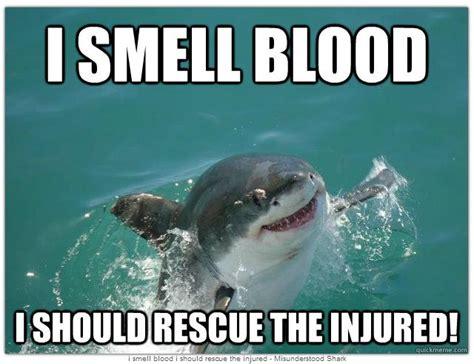 Shark Week Meme - 17 best ideas about shark meme on pinterest funny memes