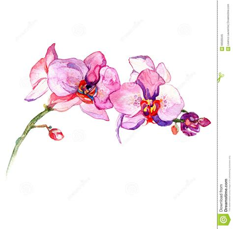 the new view of orchid watercolor hand drawn for postcard
