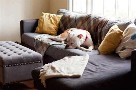 pet sofa covers that stay in place best sofa for dogs new 28 sofa for dogs liloe beds 25 best
