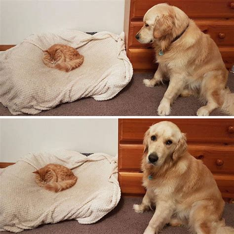 puppy and not getting along 10 times owners wanted cats and dogs to live together but it didn t work out as