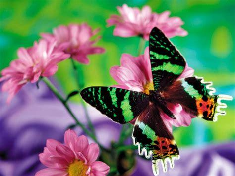 imagenes mariposas de colores brillantes galer 237 a de im 225 genes mariposas de colores