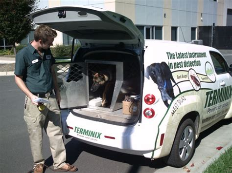 terminix bed bugs cost bed bug pest control cost stunning heat bed bugs why settle for pest controlwe