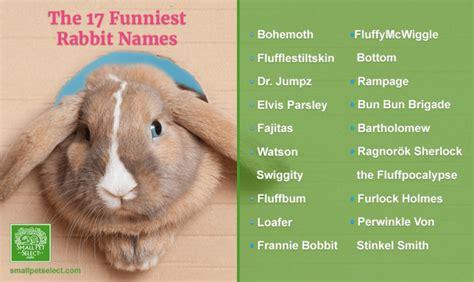 pet rabbit names pets world
