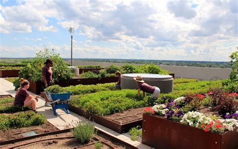 Rooftop Garden Indianapolis by The Commonground And Sky Farm At Eskenazi Health Hospital David Rubin Land Collective