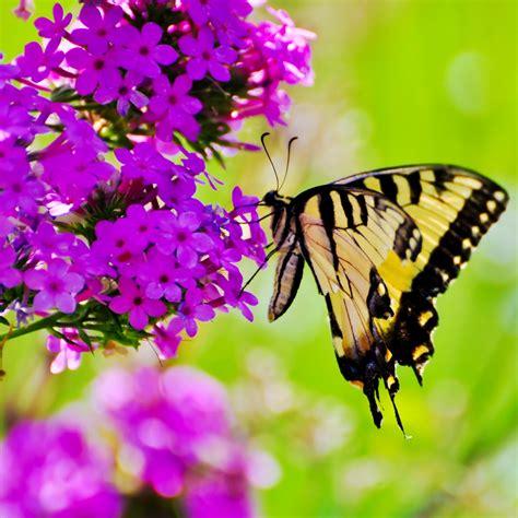 garten pflanzen im juli der garten im juli gartenarbeit und pflanzenpflege im