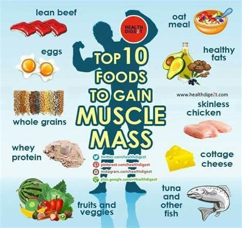 best mass gain protein 1000 ideas about gain diet on gain