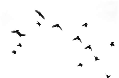 black and white wallpaper with birds black and white images of birds 17 desktop wallpaper