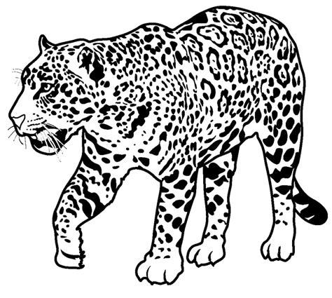 coloring pages jaguar animal jaguar coloring pages only coloring pages