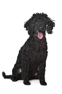 names for black dogs black names the ultimate list 99 awesome names