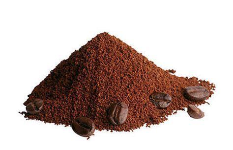 Coffee Powder 10 best home remedies to get rid of lizards feminiyafeminiya