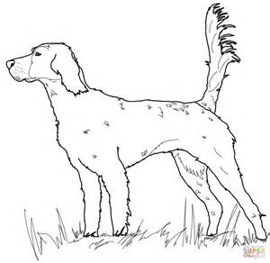 english setter coloring free printable coloring pages