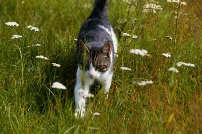 are trees toxic to cats is a money tree plant toxic to cats pets