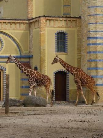 zoologischer garten berlin kinder kinder ausflug zoobesuch zoologischer garten berlin