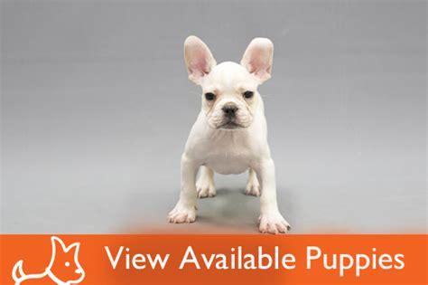 petland lake puppies petland lake 815 455 5479 welcome to petland lake