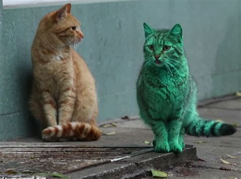Green Cat what s the deal with this green cat inhabitat green
