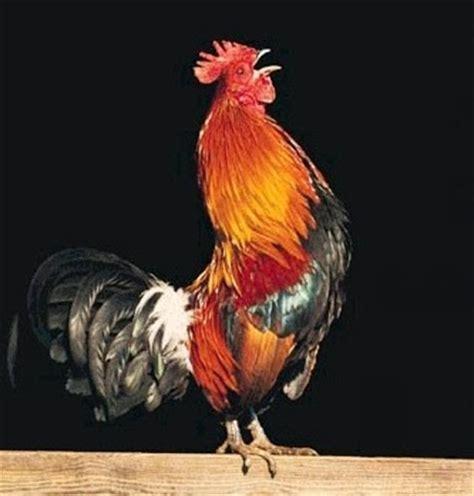 gallo a ti llamados a servir las siete reglas gallo reflexi 243 n
