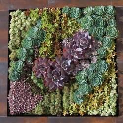 Growing A Vertical Wall Garden Of Succulents Living