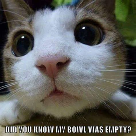 Cute Cat Memes - someone s in trouble pet humor cute cat meme humor