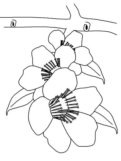 fiori di pesco disegno fiori 13 disegni per bambini da colorare