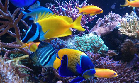 colorful saltwater fish saltwater fish wallpaper 58 images