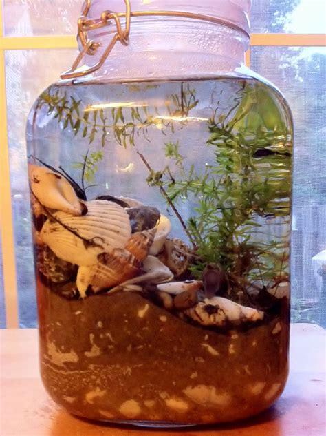 sustaining snail ecosystem terrarium   jar
