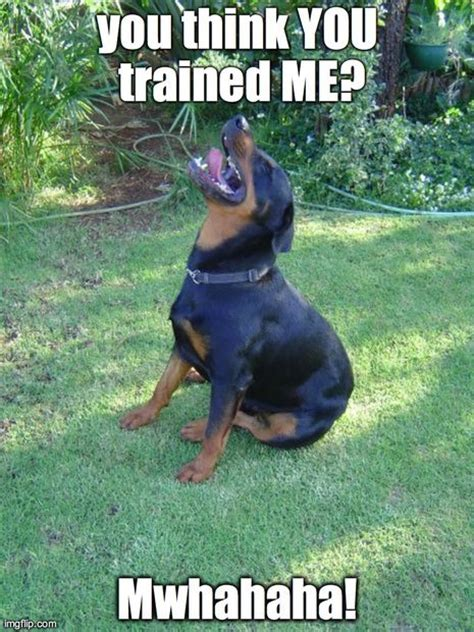 rottweiler jokes 25 best ideas about rottweiler on menes mad meme and