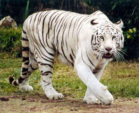imagenes de animales salvajes image gallery imagenes de animales salvajes