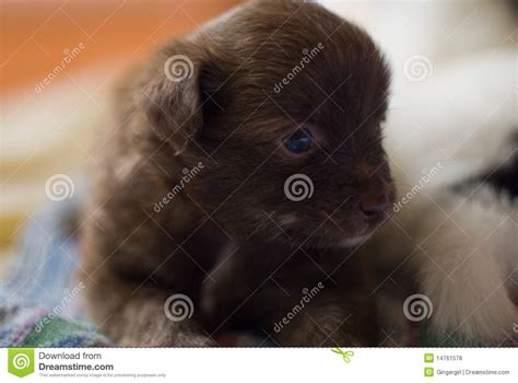 are dogs mammals mammal royalty free stock photos image 14761578