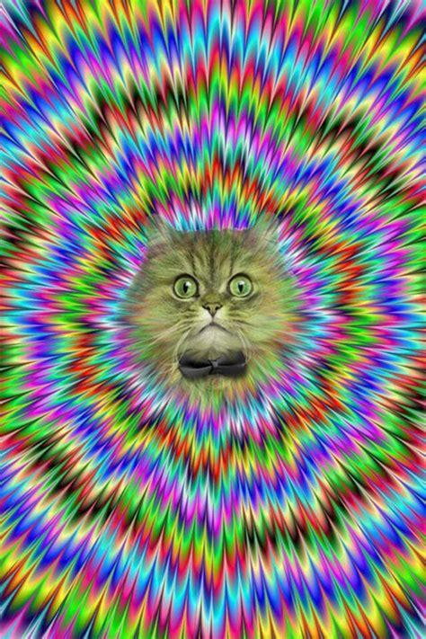 wallpaper crazy cat crazy cat wallpaper brain games and illusions
